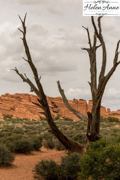 Colorado May 2015-4955-20
