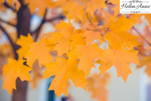 Perfect yellow leaves!