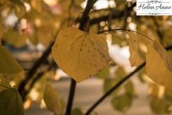 doylestown-november-2016-2260-36