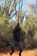 tarzan baobab