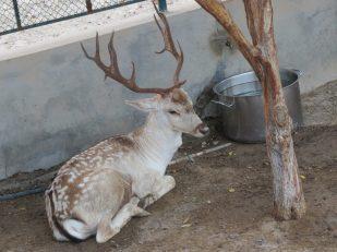 deer feeding area