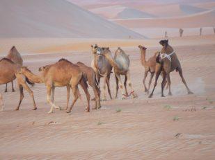 Desert Staycation - Tilal Liwa Abu Dhabi