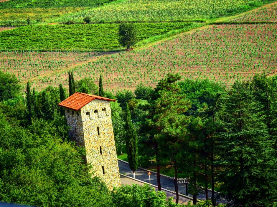 Full Day Wine Tour to Kakheti from Tbilisi