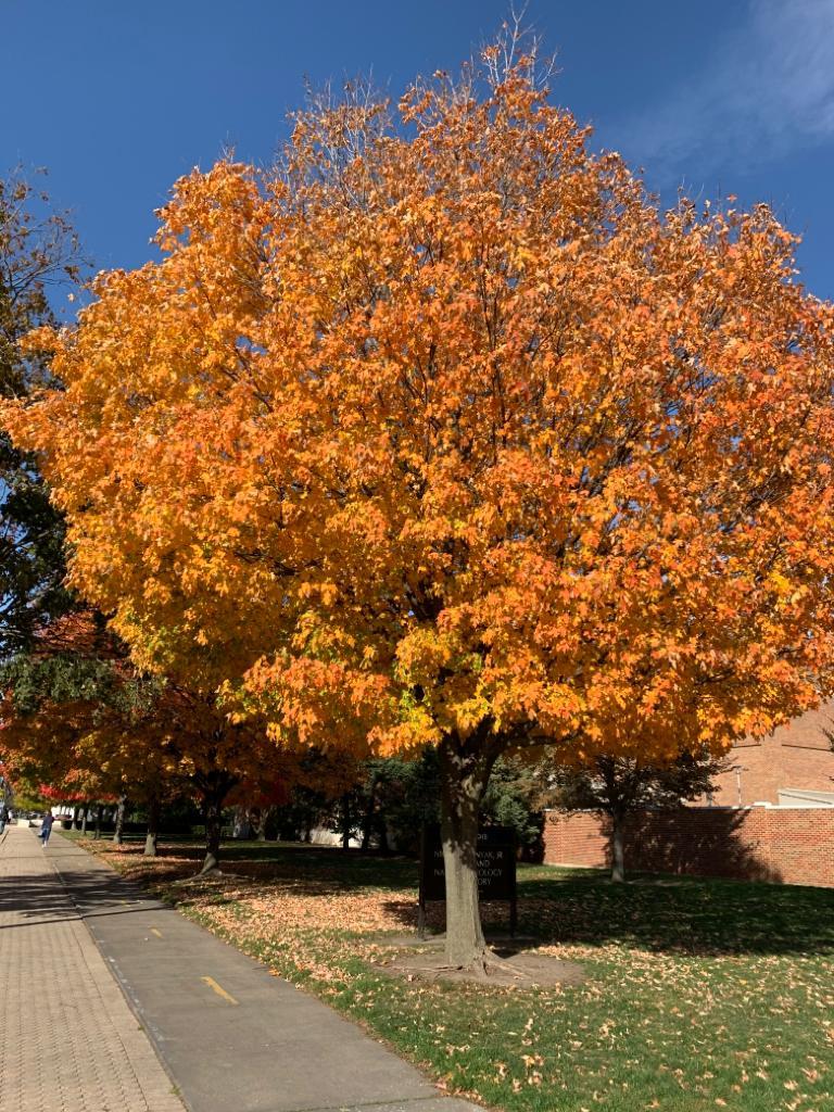 Champaign in Fall