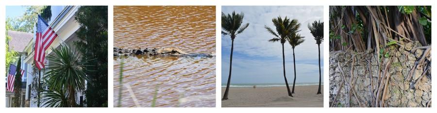 Palmiers et alligators dans le Sud des Etats-Unis