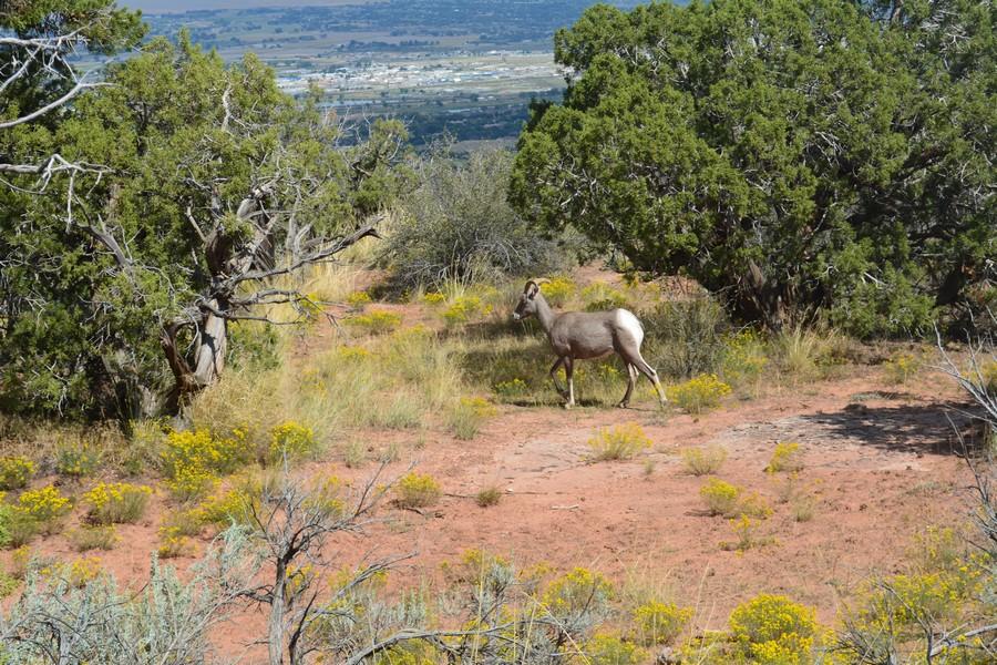 1 296 - Autotour road trip Colorado & ranch