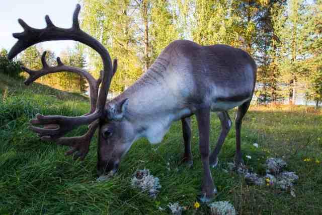 Travel with Meraki - Finland - Lapland - Santa