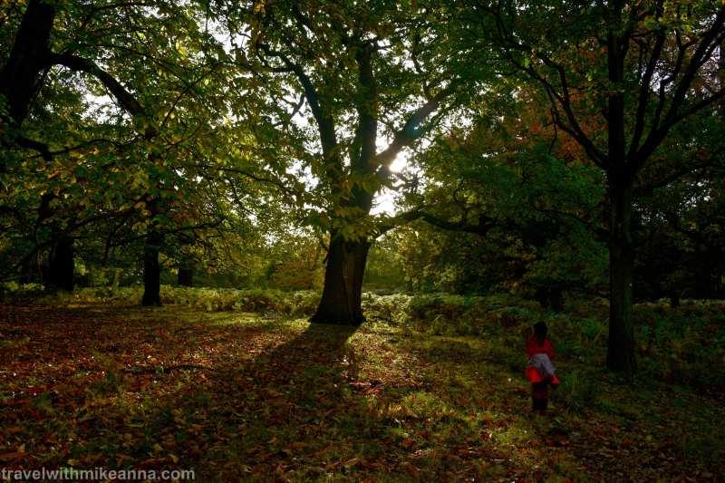 鹿群外這個保存完整的公園也是散步與讓孩子在大自然玩耍的好去處