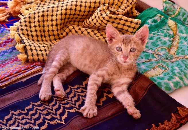 路上發現的小貓 ,愛貓的Amber照例非常興奮!
