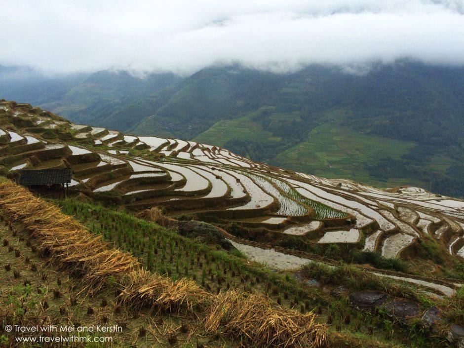 Longji Rice Terraces in Longsheng, Guanxi, China © Travelwithmk.com