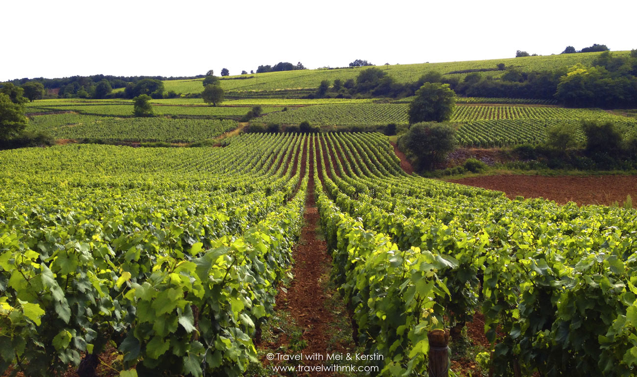 Vineyards in Burgundy, France © Travelwithmk.com