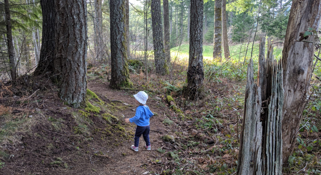 Skamania Hiking Trails