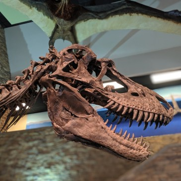Exploring Dinosaurs and Fossils at Thanksgiving Point's Museum of Ancient Life