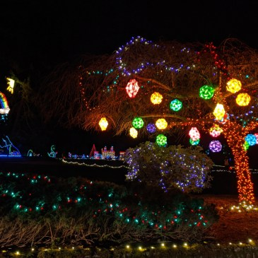 Fantasy Lights in Spanaway: What You'll See and What to Expect