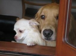 בית מלון לכלבים ליד רובע שיבויה