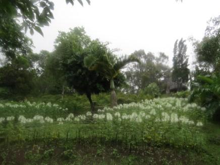 פרויקט מלכותי לפיתוח אזור דוי אינתנון