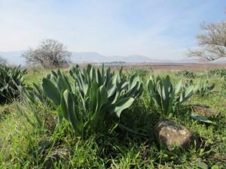 שביל החורף בנחל שניר, צילום: נעה הס אשכנזי