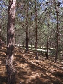 פיקניק בפארק אדמית