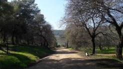 דרך נוף יער בית קשת