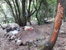 שביל הגולן ביער אודם