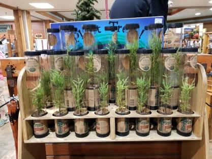 עצי סקויה למכירה במרכז המבקרים לוג'פול