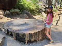 """מסלול טיול בארה""""ב - שמורת עצי הסקויה"""