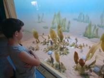 מוזיאון המדע מוזיאון המדע והטבע בדנוורוהטבע בדנוור