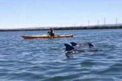 Adventure kayaking, Adelaide kayaking, Adelaide water activities, Garden Island, Port Adelaide, dolphin exploring, dolphin kayaking, dolphins