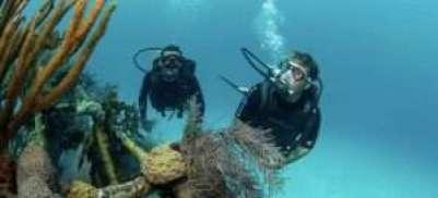 Diving Yorke Peninsula, Scuba diving Yorke Peninsula, Snorkelling Yorke Peninsula, scuba