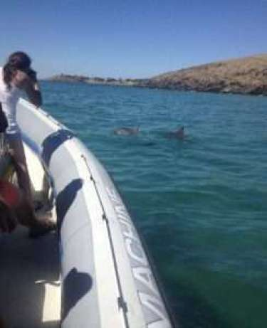 Kangaroo Island Ocean Safari with dolphins