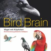 Bird Brain von Nathan Emery