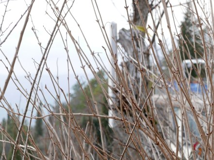 Gubbio_biggest_christmas_tree_umbria_italy_stanito_4