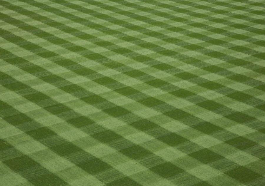 Grass1-IMG_8156.jpg