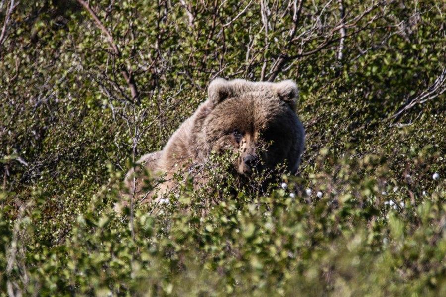 Bear2a.jpg