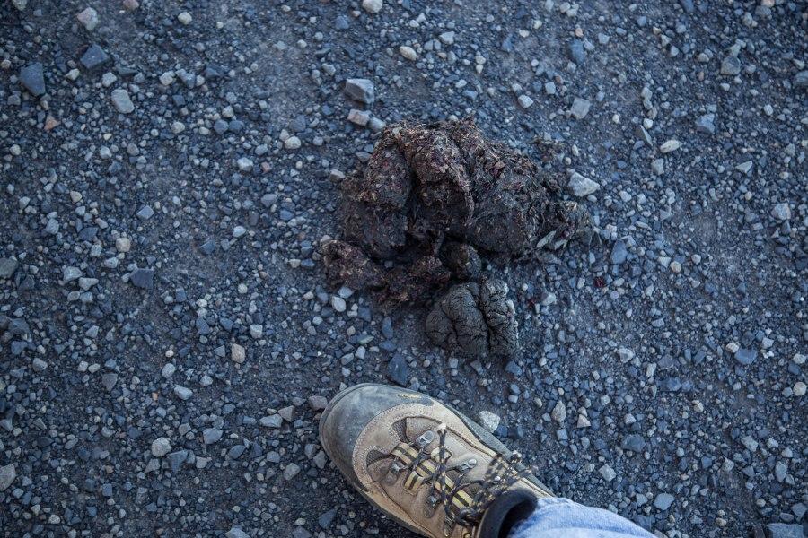 Poop1.jpg