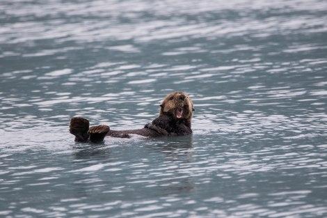 Otter1.jpg
