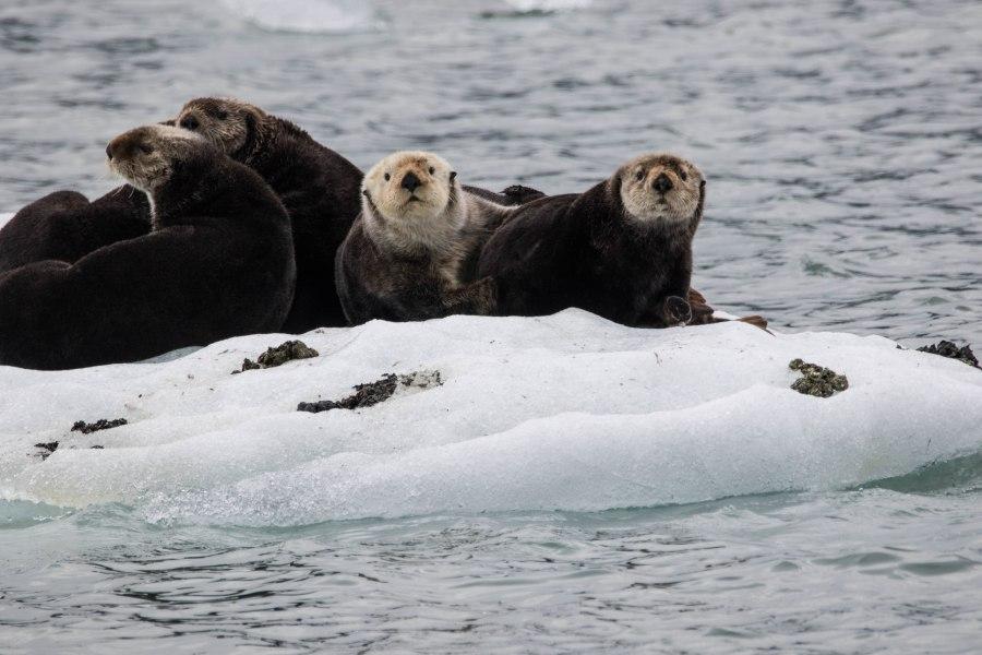 Otter3.jpg