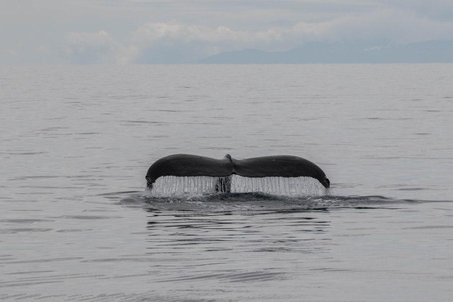 Whale3.jpg