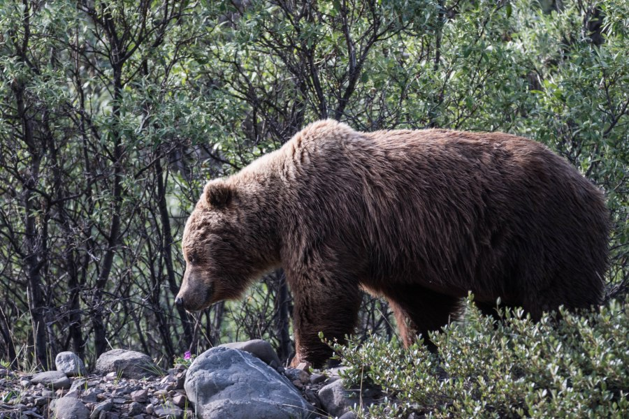 Alaska-02.jpg