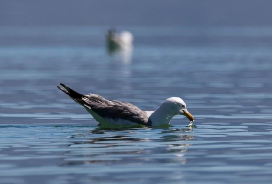 Bird-01.jpg