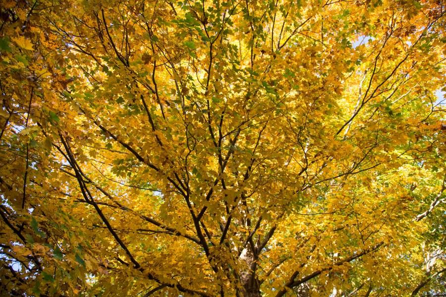 Foliage-02.jpg