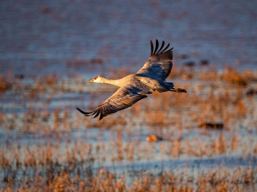 Cranes-07.jpg