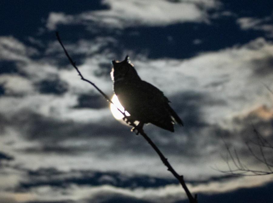 Owl-02.jpg