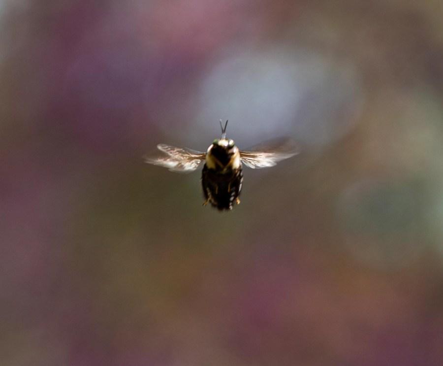 Bee-02.jpg