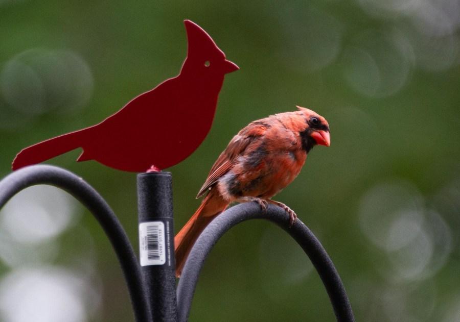 Birds-07.jpg