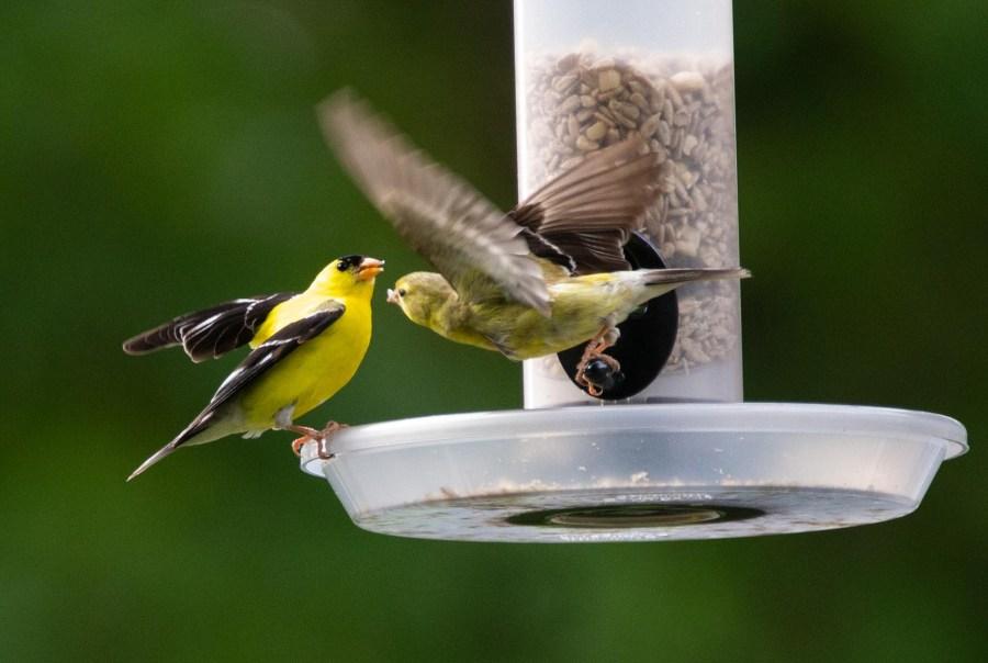 Birds-09.jpg