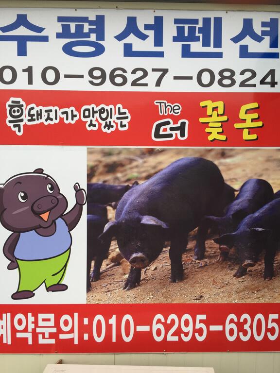 Jeju Island Piggies