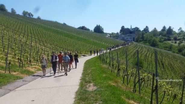 TWW - Esslingen Wine walk