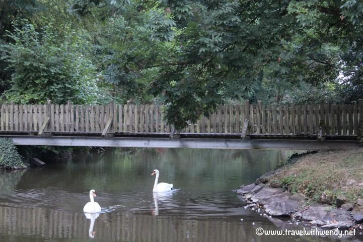 tww-bad-bertrich-swans