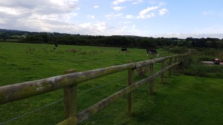 tww-pastoral-fields-of-chapmanslade